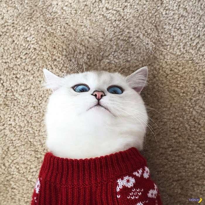 Коби –кот с самыми красивыми глазами в мире