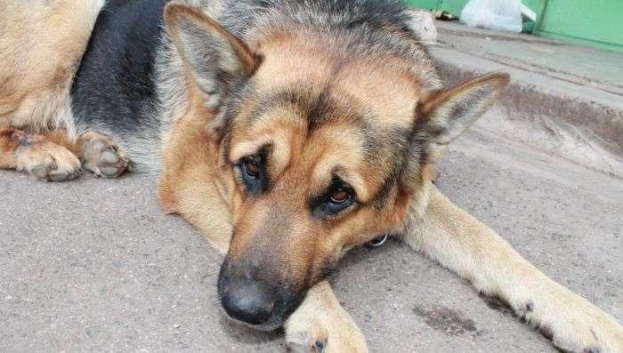 Пенсионер вторую неделю ждет на улице пропавшую собаку (3 фото)