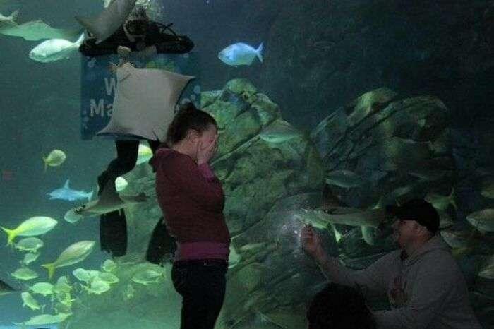 В канадском океанариуме скат попытался сорвать помолвку (3 фото)