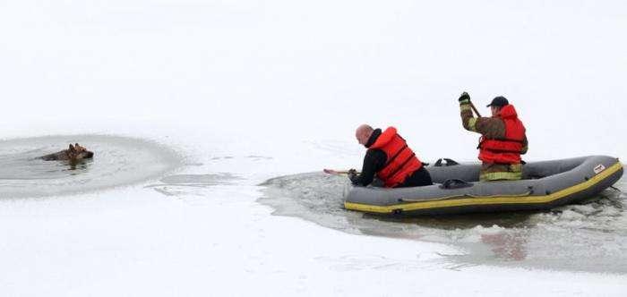Зимние картинки (42 фото)