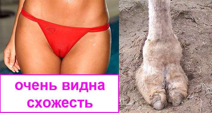 схожесть верблюжьих лапок женщины и животного