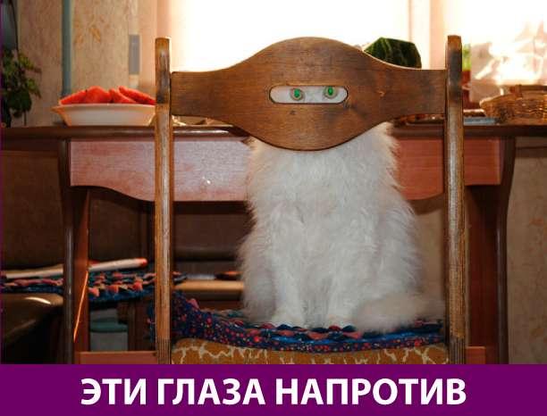 Приколняшка 762 #юмор #приколы #смешные картинки
