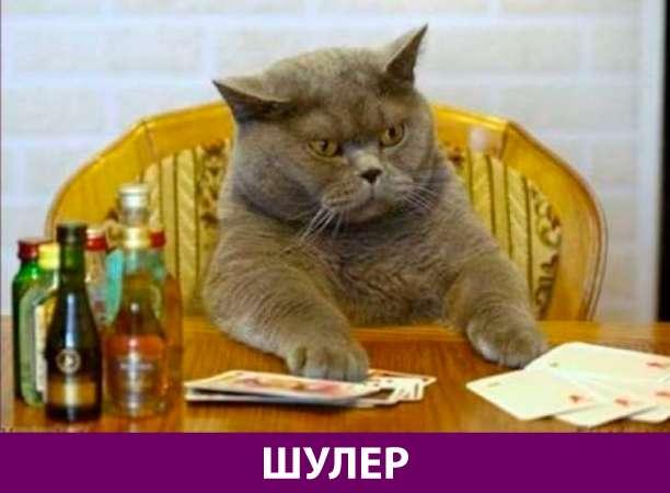 Приколняшка 765 #юмор #приколы #смешные картинки
