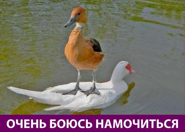 Приколняшка 768 #юмор #приколы #смешные картинки