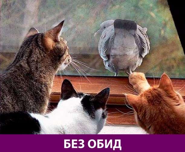 Приколняшка 769 #юмор #приколы #смешные картинки