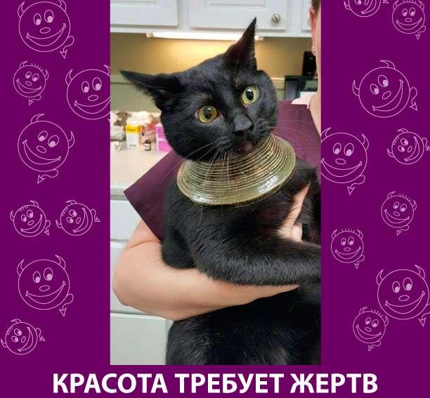 Приколняшка 801 #юмор #приколы #смешные картинки