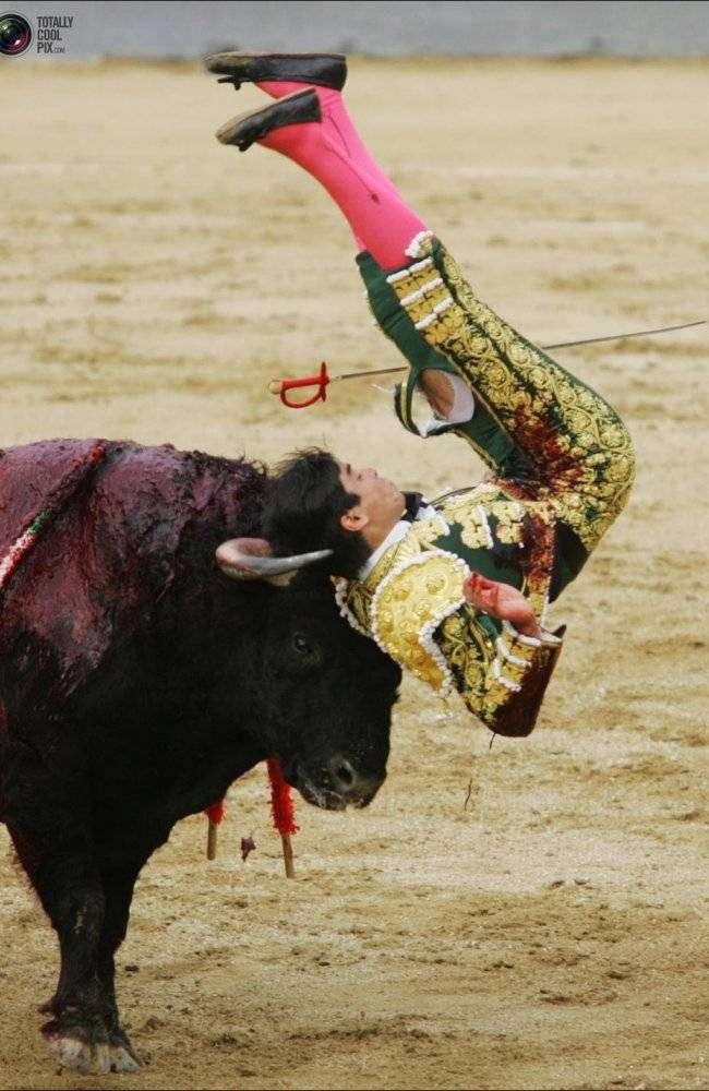 Месть быков (24 фото)