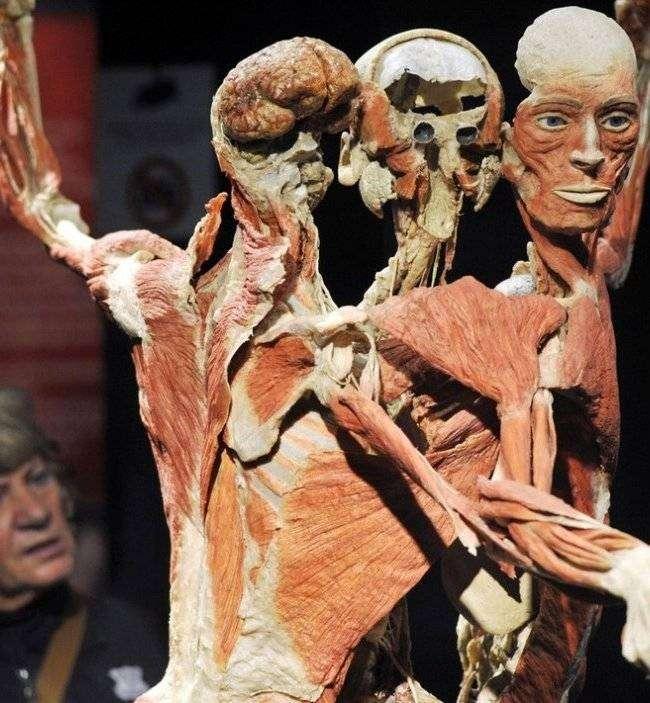Выставка «Миры тела» – искусство или глумление? (16 фото)