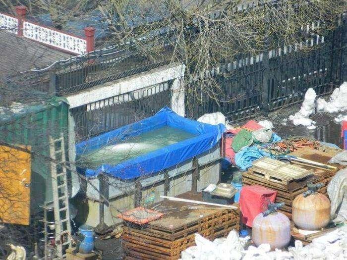 Активисты выступили против дельфинария в Бишкеке (4 фото)