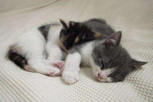 Брат и сестра (18 фото)