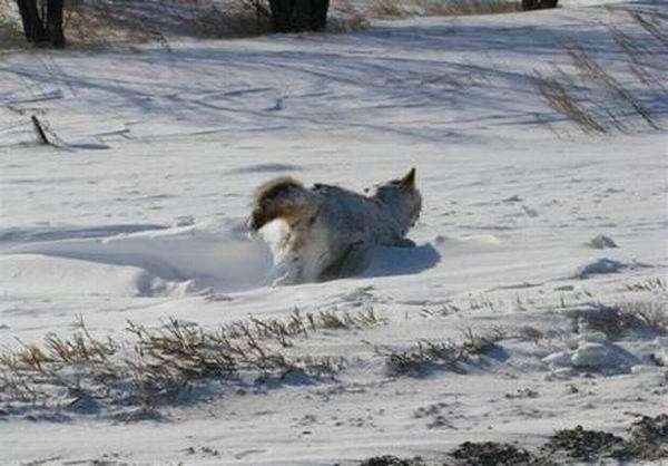 Замерз на ходу (5 фото)