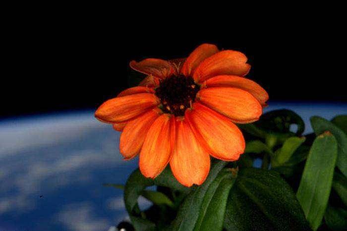 Фотографии, сделанные с борта МКС, американским астронавтом (44 фото)