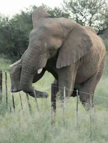 Самый аккуратный слон на свете (4 фото)