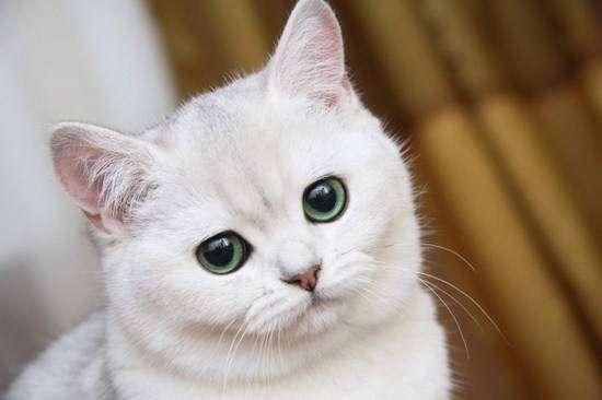 Это факт! Кошки испытывают стресс от слишком ласковых хозяев