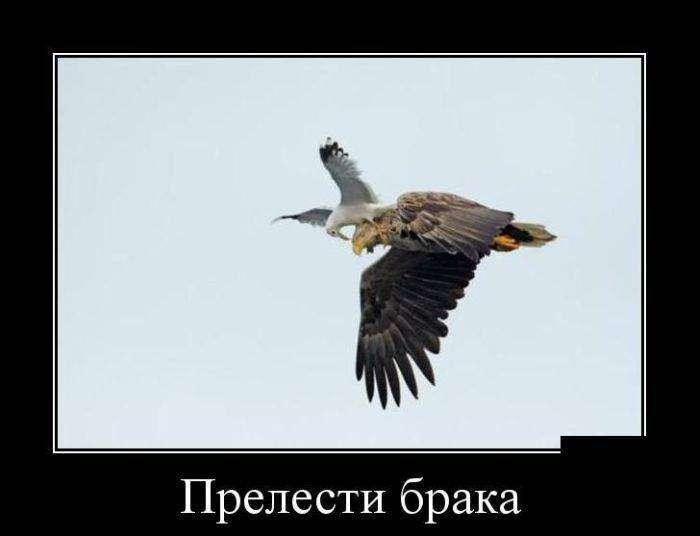 Демотиваторы на 9.03.2016г (30 фото)