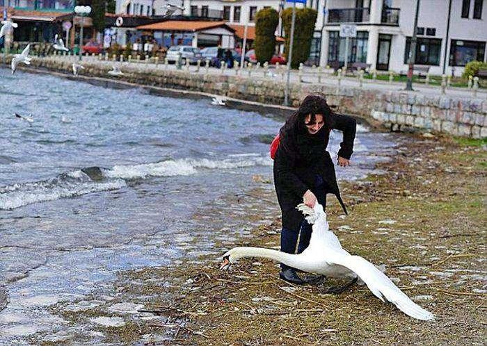 В Македонии туристка насмерть замучила лебедя ради фотосесси (3 фото)