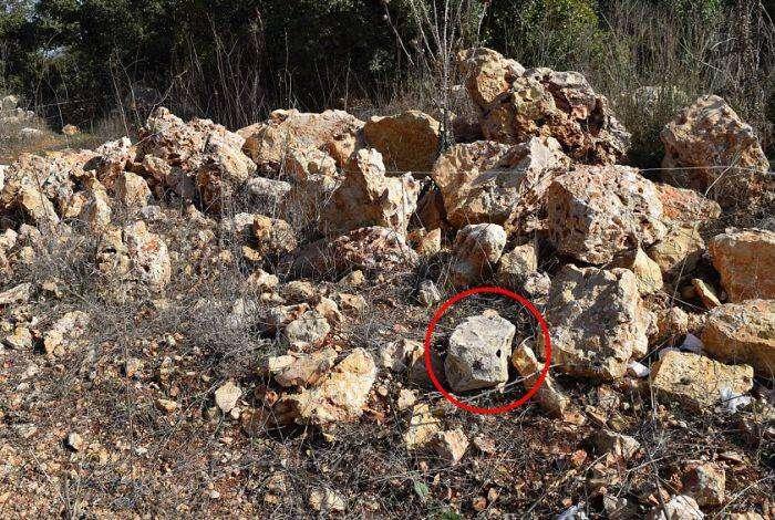 Искусно замаскированные мины (15 фото)