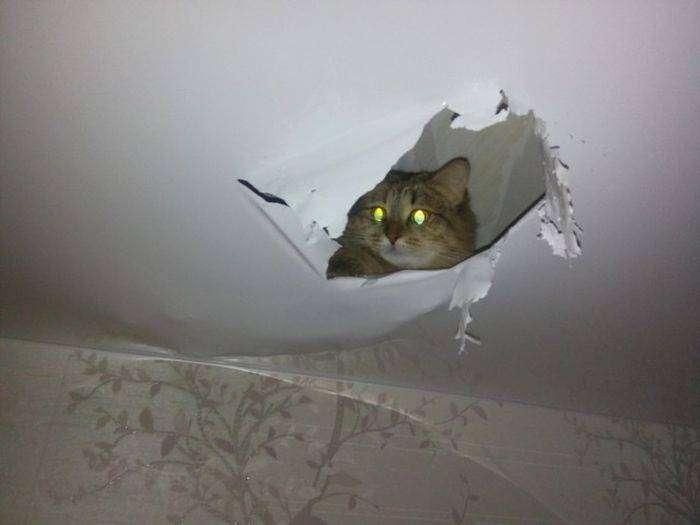 Кошка сделала себе «нору» в потолке (2 фото)