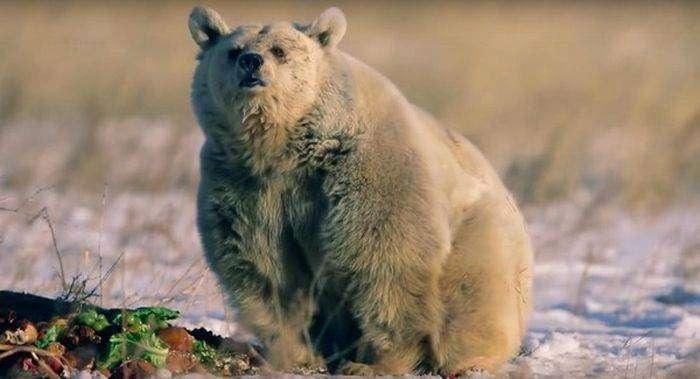 Медведица ждала своего спасения на протяжении 30 лет (11 фото)