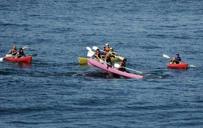 Туристы прокатились на спине кита (4 фото)