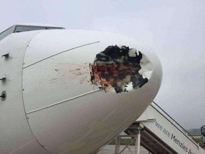Последствия столкновения самолета со стаей птиц (4 фото)