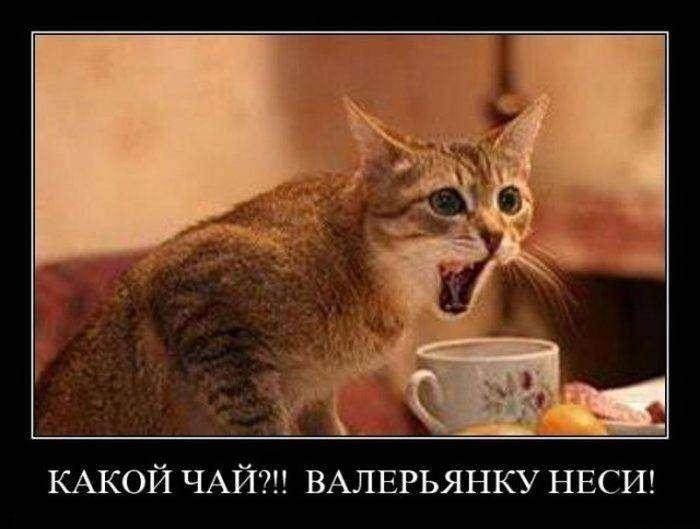 Демотиваторы на 18.03.2016г (30 фото)