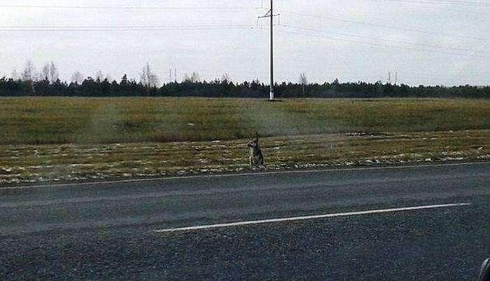 В Сибири вот уже 1,5 года пес ждет возвращения погибшего хозяина (3 фото)