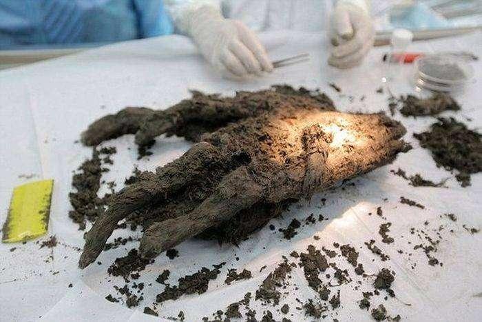 В Якутии найден детеныш древнего хищника (6 фото)