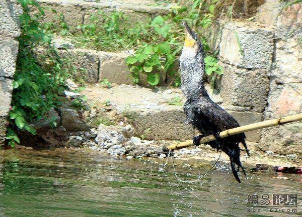 Интересный способ рыбачить (10 фото)