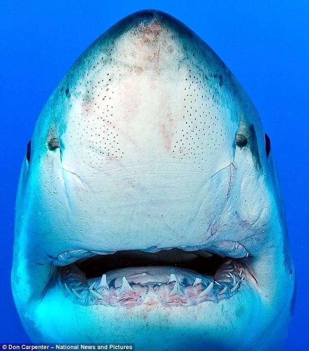 Близкое фото акулы (3 фото)