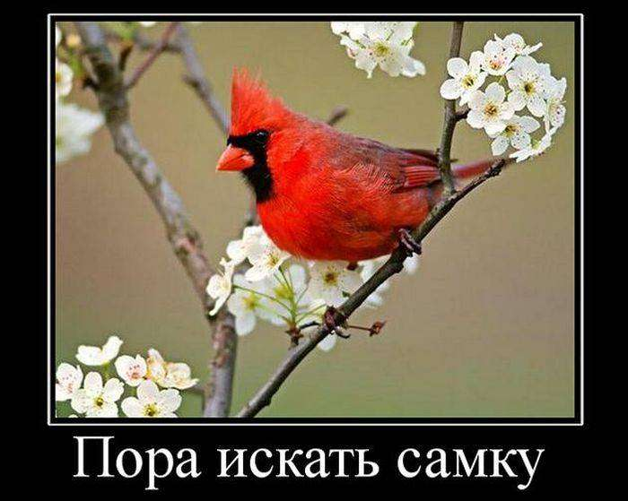 Демотиваторы на 24.03.2016г (30 фото)