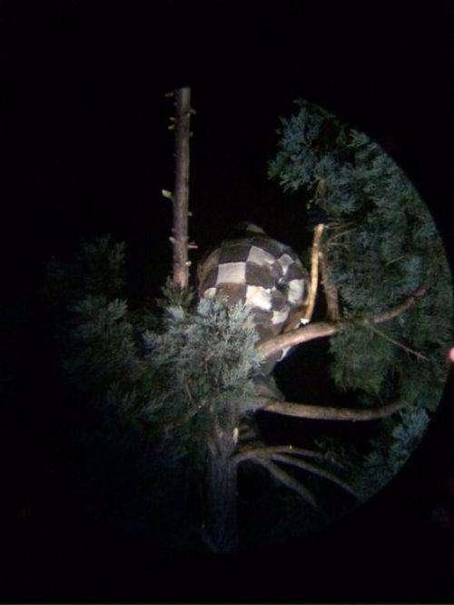 Странный американец залез на дерево (3 фото)