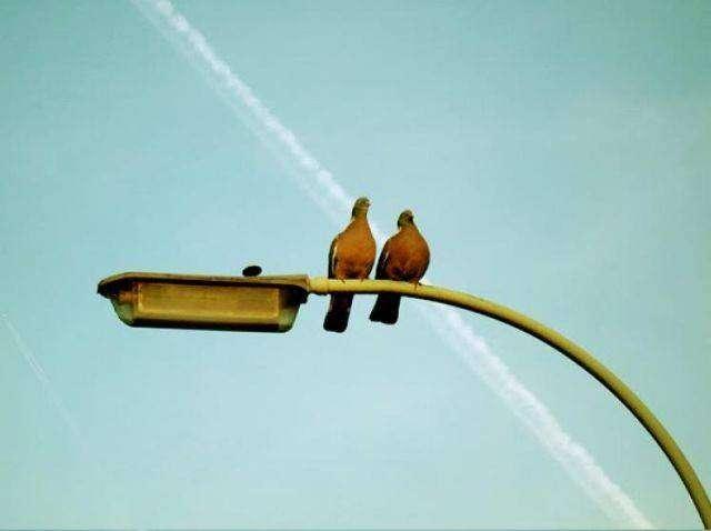Как свершается любовь (2 фото)