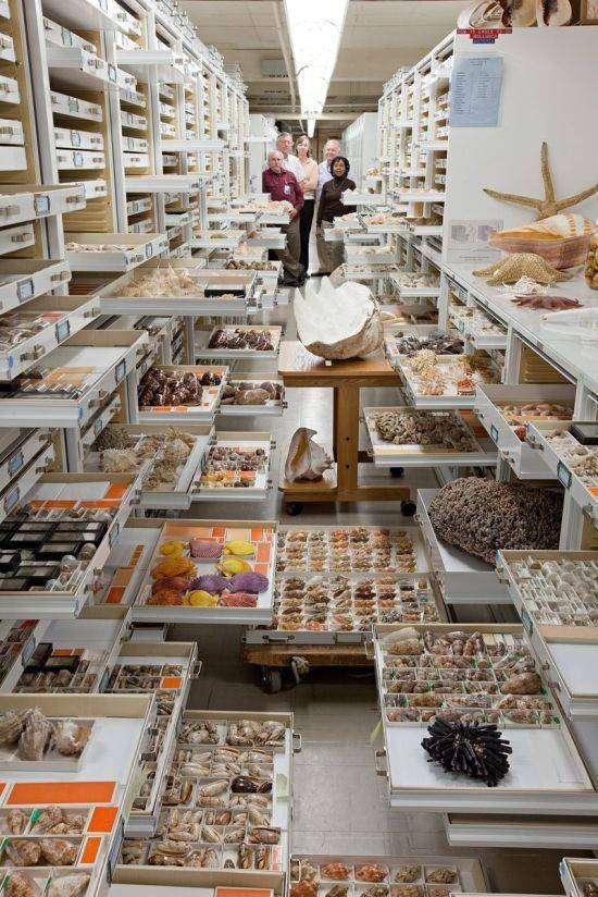 Хранилище Национального музея естественной истории в Вашингтоне (5 фото)
