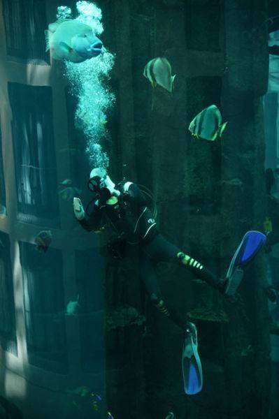 Лифт в аквариуме (11 фото)