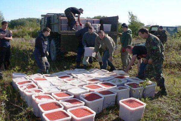 Уничтожение четырех тонн красной икры на Камчатке (21 фото)