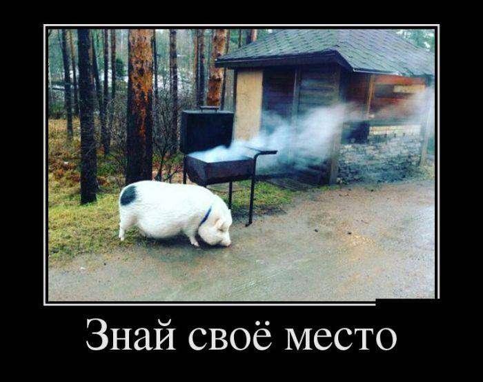 Демотиваторы на 31.03.2016г (30 фото)