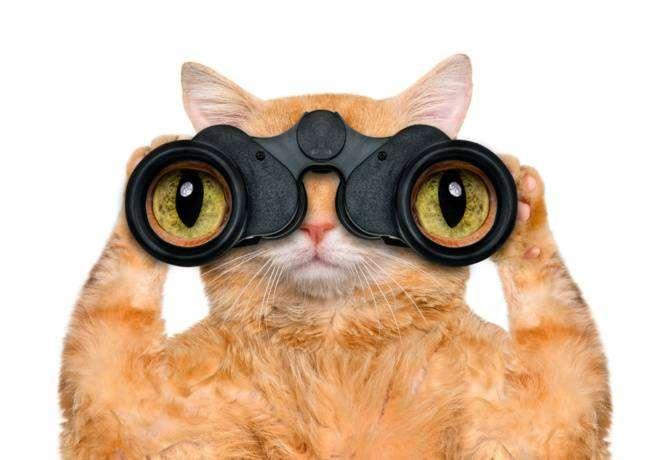 9 животных, подозревавшихся в шпионаже