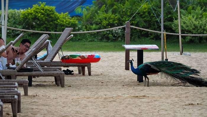 Они отдыхают на пляже, пока другие работают, возмутительно!