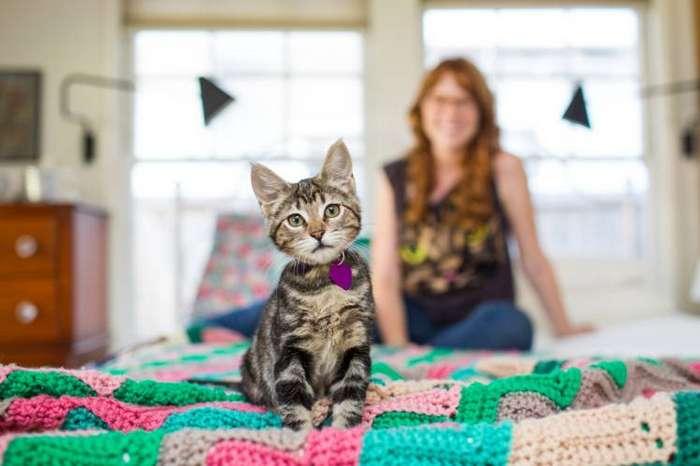 16 вещей, о которых вам не скажут при приобретении кошки