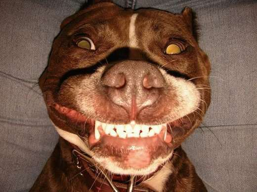 Животных рассмешили... (18 фото)