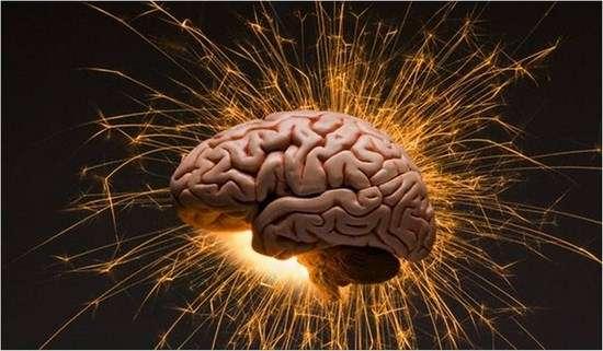Это факт! Количество извилин в мозгу никак не связано с наличием ума
