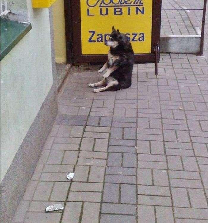 Сидячая собака (4 фото)