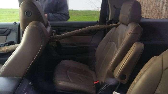 Ветка пронзила автомобиль (3 фото)