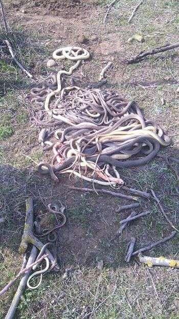 В Дагестане пенсионерка убила 80 змей,на ее огороде (2 фото)