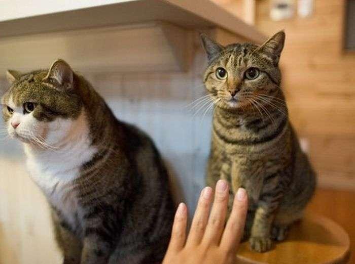 Два типа домашних котов (4 фото)