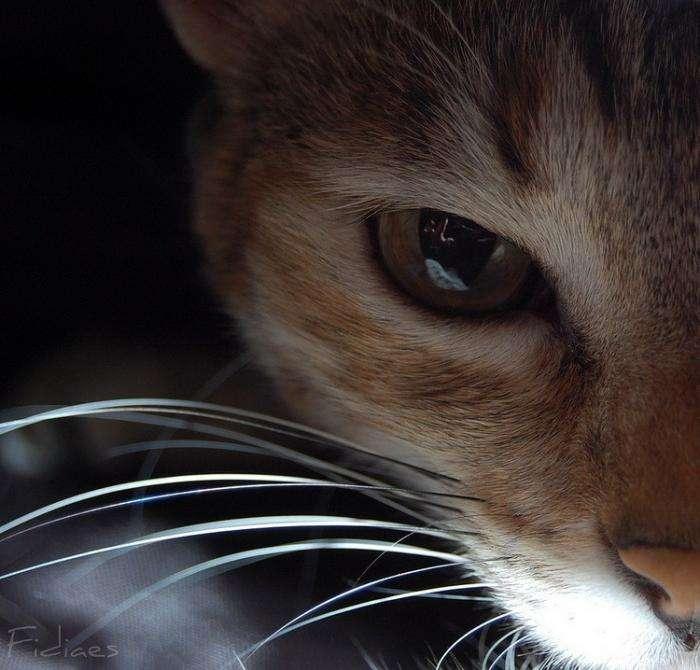Котики (23 фото)