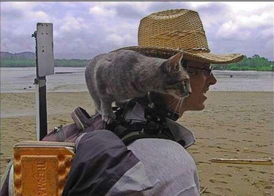 Кот - путешественник (10 фото)