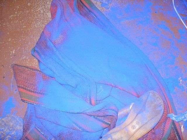Голубой пес (7 фото)
