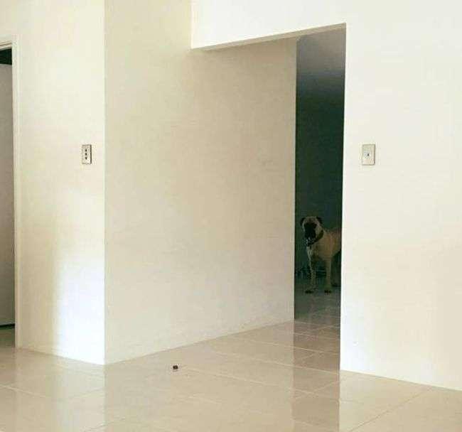 Пес думает, что его не видят (18 фото)